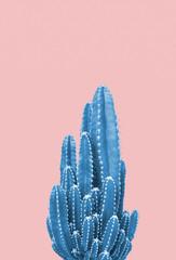 Photo sur Aluminium Cactus Blue cactus on pink background