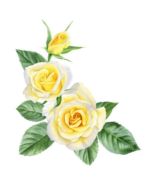 Watercolor bouquet of yellow roses flowers, buds, leaves. Floral logo. Frame for cards.