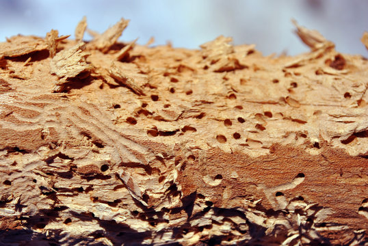 Tree branch texture with termite holes, natural wooden organic background texture close up detail