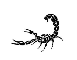 Graphical scorpion isolated on white background, vector illustration,tattoo