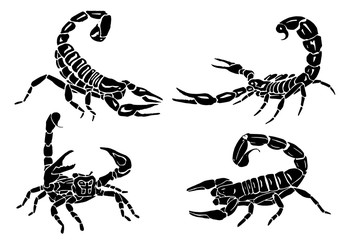 Graphical set of scorpions isolated on white background, vector illustration,tattoo