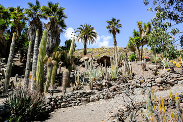 Photo sur Toile Ile cactus plantation and summer time