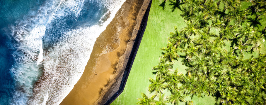 Aerial photo of green palms and sea with beach