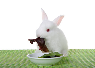 Baby albino bunny rabbit sitting on a green weave place mat with tiny bowl of lettuce, eating, isolated on white background.