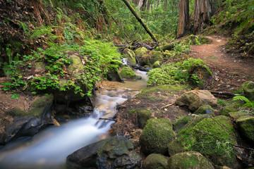 Berry Creek Hiking Trail & Redwoods in Big Basin State Park, Santa Cruz Mountains