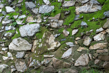 Moss and ferns growing around rocks and stones, creating nature background