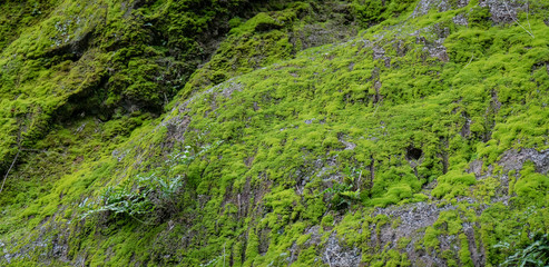 Rocky hillside with moss, lichen and ferns growing
