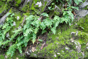 Ferns growing on the side of a rocky hillside with moss and some dead leaves