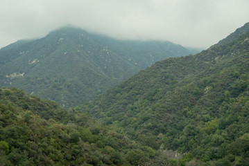 Tree covered mountains reaching up and disappearing into low clouds in Southern California