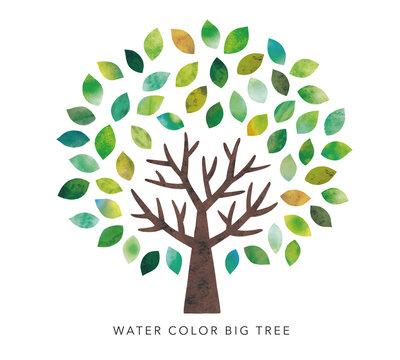 水彩の大木