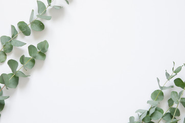 Eucalyptus leaves on white background. Flat lay, top view, copy space Wall mural