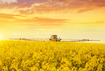 Tractor in spraying the oilseed rape farmland during spring blossom at sunset.