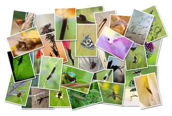 photos d'insectes sur fond blanc