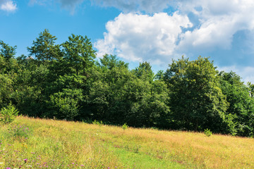 forest on the grassy meadow. wonderful summer weather with cloudy sky. beautiful nature background