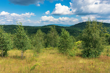 young forest on the grassy hill. wonderful summer weather with cloudy sky. beautiful nature scenery in mountains
