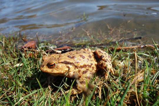 Frog on the lake shore