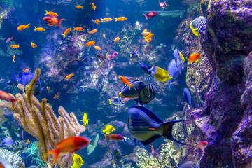 colorful reef fishes - fototapety na wymiar