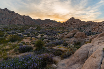 Joshua Tree National Park scenery at sunset