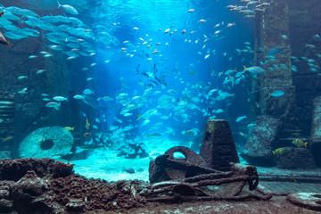 Aquarium at Atlantis, Bahamas