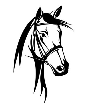 horse head with bridle - black and white equestrian sport vector portrait