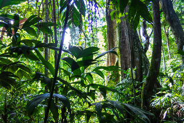 Wall Murals Jungle Amazon forest in the Madidi National Park, Bolivia