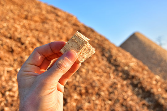 wood chips wooden biomass business