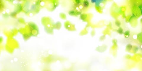新緑 光 緑 背景  Wall mural