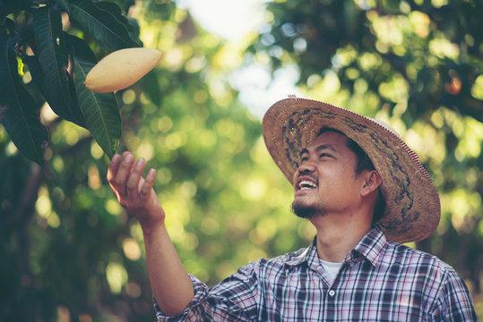 Young smart farmer, mordern mango farm