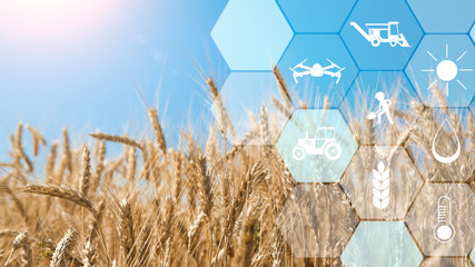 Precision agriculture network icons on wheat field background Wall mural