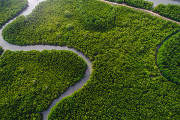Aerial view green mangrove tropical forest swamp line to sea