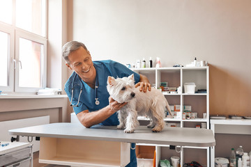 My cute patient. Cheerful middle aged vet looking with smile at small dog standing on the table at veterinary clinic