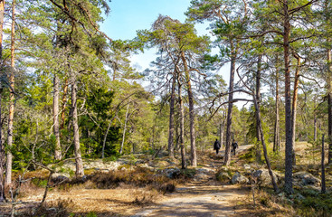 A walk a beautiful spring day in Tyresta National Park