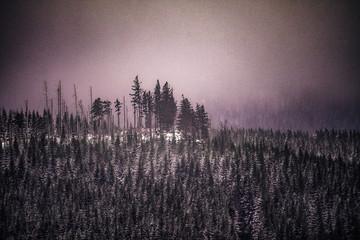Foto auf Acrylglas Morgen mit Nebel Wandern auf dem Burgberg im März