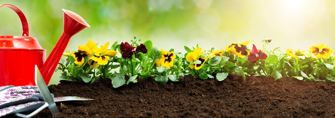 Foto auf Acrylglas Stiefmutterchen Gardening tools on soil background. Planting spring pansy flower in garden. Spring garden work concept