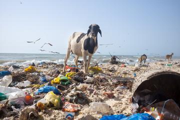 coastal pollution in Senegal