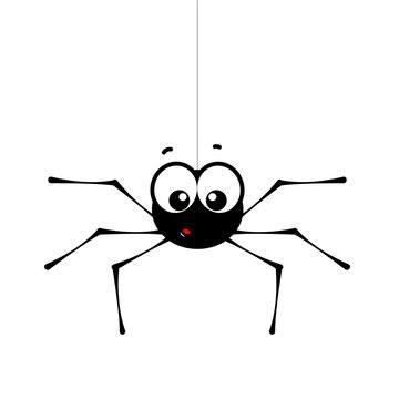 Surprised small spider