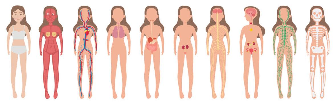 Body System Woman Human Set
