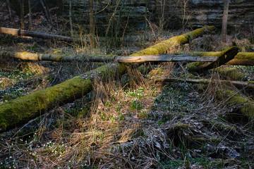 Fallen trees between snowflakes  in Peklo valley in czech turist region Machuv kraj