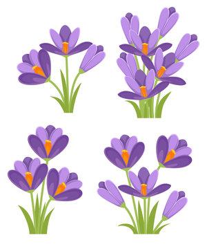 Purple crocuses. Crocus vernus Spring Crocus, Giant Crocus . Purple early spring flower. Flat vector illustration isolated on white background. Icon set
