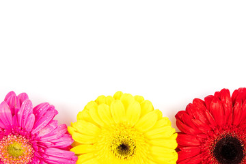 Colored gerbera flowers