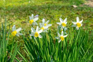 springtime - flowers in the garden