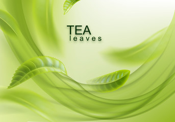 Green tea. Abstract background with tea leaves. Vector illustration for design, advertising, packaging of tea products. Wall mural
