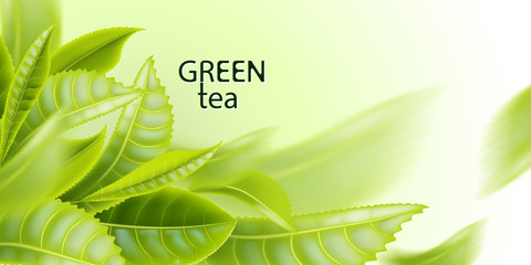 Green tea. Tea leaves background. Element for design, advertising, packaging of tea products. Vector illustration.