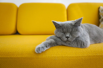 Papiers peints Chat Cat sleeping on a mustard yellow sofa.