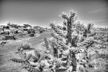 Petrified Forest cacti scenery
