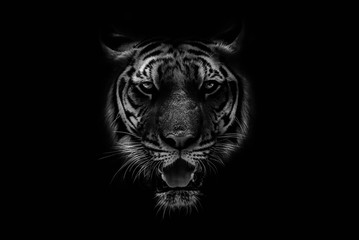 Poster de jardin Tigre Black & White Beautiful tiger on black background