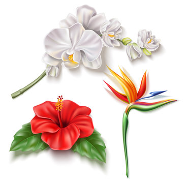 Vector realistic tropical flower 3d hibiscus orhid