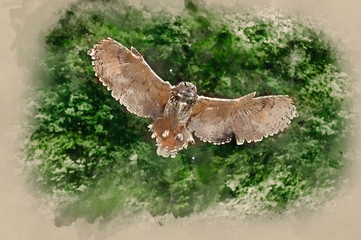 Fotoväggar - Watercolour painting of Stunning European eagle owl in flight