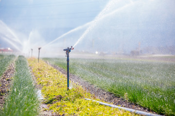 Irrigation plant system on a field, agriculture and plants