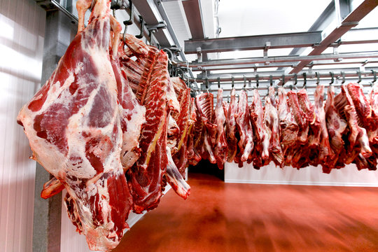 Close up of a half cow chunks fresh hung and arranged in a row in a large fridge in the fridge meat industry.